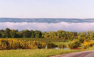 picture of FingerLakes Natl Forest